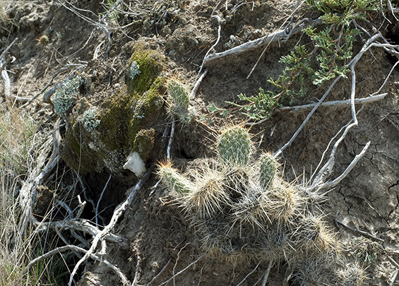 cactus-and-moss