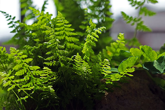 fav-ferns
